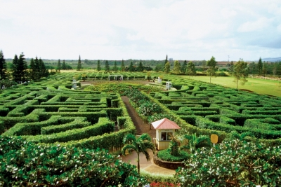Maze at the Dole Plantation
