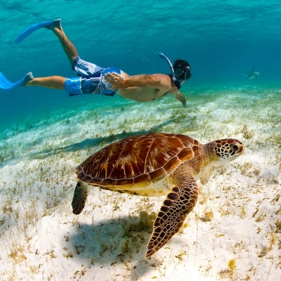 Man snorkeling with a giant turtle