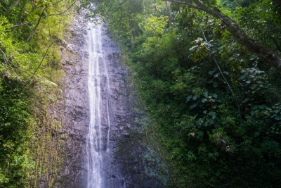 Manoa Falls waterfall on Oahu