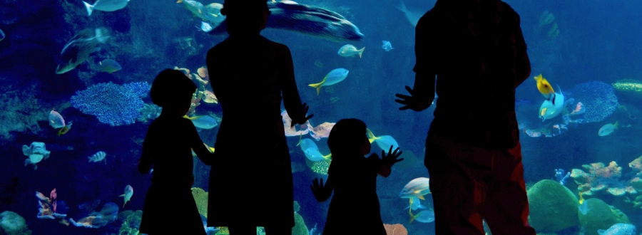 Family looking at fish in a large aquarium