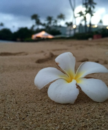 Flower on an Oahu beach