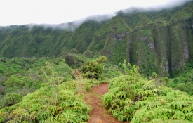 Kualoa Valley Hiking Trail - an Oahu Thing to Do