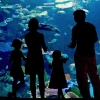 A family looking at a large tank in an aquarium